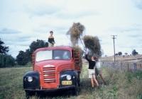 57 Hay Carting Sydney Lee on top of Truch & Derek Manning loading Hay