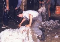 58 Jim Cooper teaching Brian Kirkby to shear
