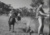 1172 Pony Club 1964